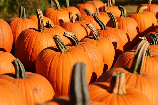 Actividades Halloween Colegios