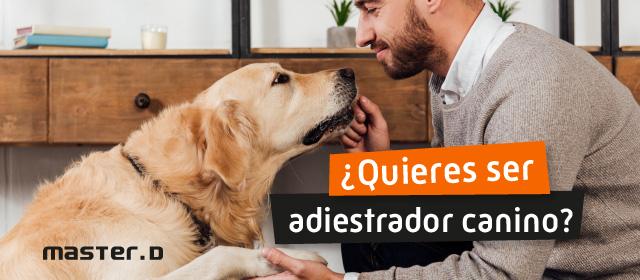 Trabajar de adiestrador canino