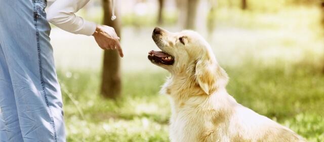 Ser adiestrador de perros
