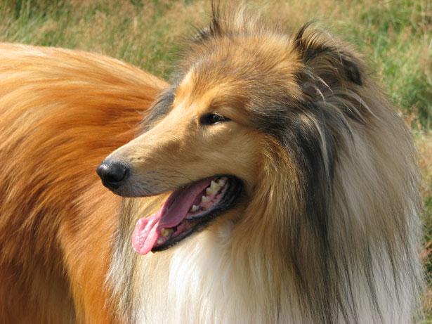 Peluquería canina: una profesión que no te aburrirá