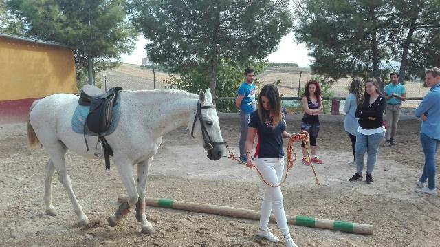 cursos caballos jaen