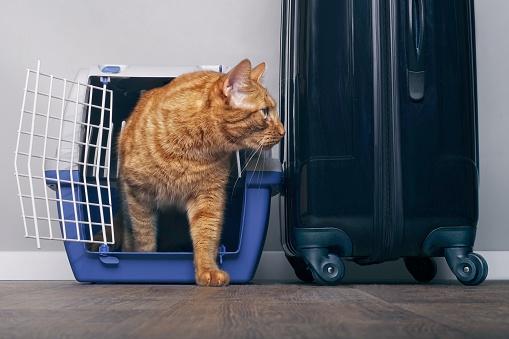 como viajar con gatos
