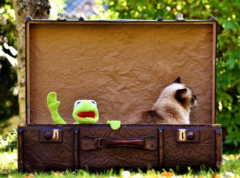 como viajar con tu gato
