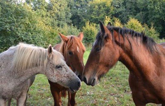 Cómo evitar accidentes comunes en caballos