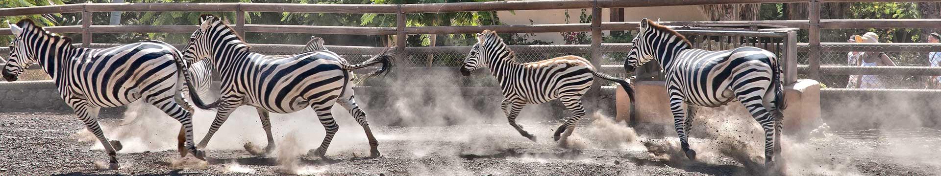 Curso de Zoológico