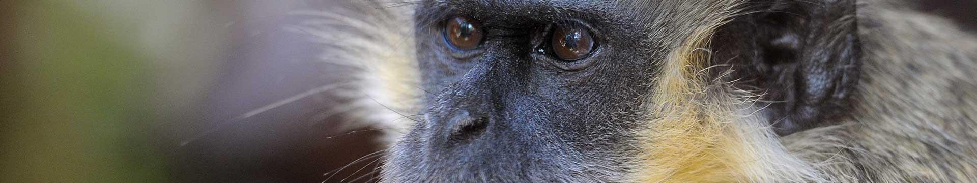 Curso Primates y Grandes Mamíferos