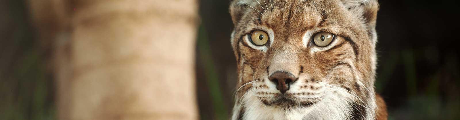 Curso de Conservación y Recuperación de Fauna