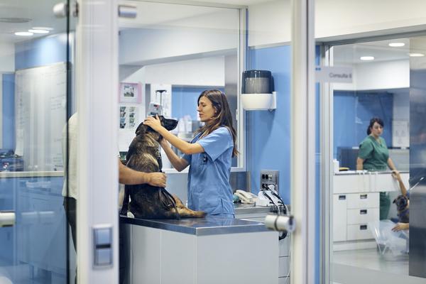 opinião do estágio em veterinária