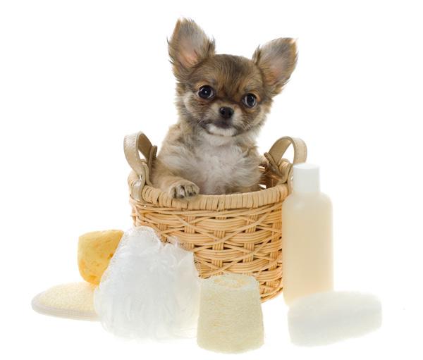 Cão e produtos para o banho