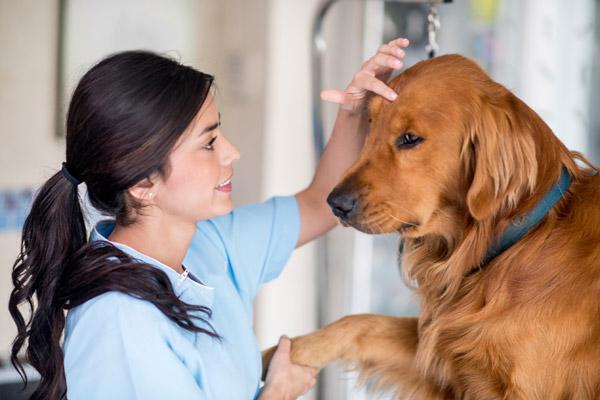 Auxiliar de Veterinária com um cão