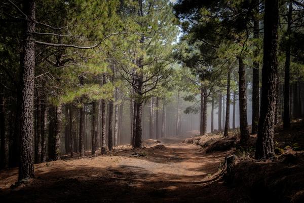 A reforma da floresta é um dos eixos de acção do ministério da agricultura
