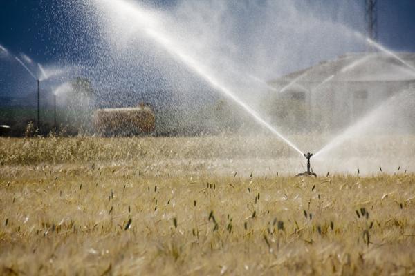 O regadio é uma das grandes apostas do ministério para a agricultura em Portugal