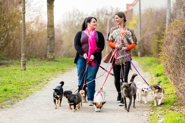 Duas pet-sitters que passeiam cães em conjunto.