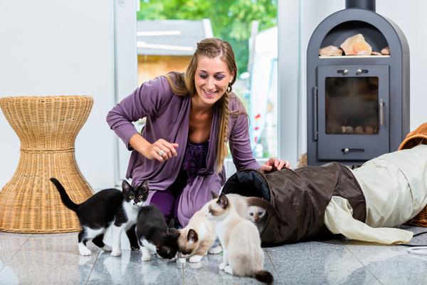 Pet-sitter que cuida de gatos e brinca com eles com um túnel.
