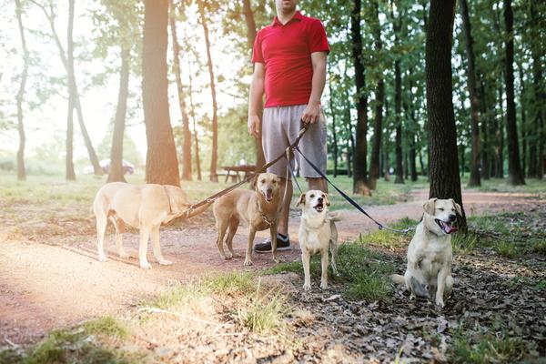 Um dos serviços de pet-sitting é passear os cães
