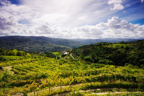 Vinhas no Norte de Portugal