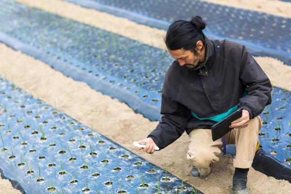 Colaborador de um empresa agrícola a obter dados através de um software especializado
