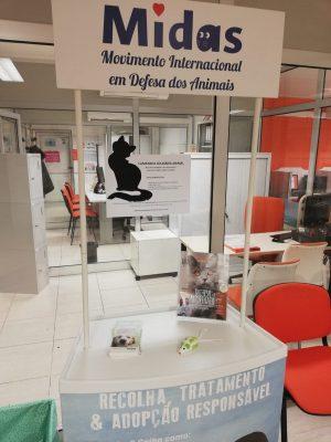 campanha solidária animal Master D Porto