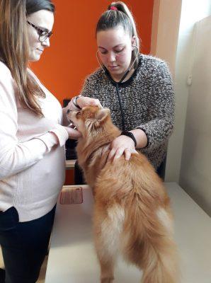 Master D-Masterclasse - Passos numa consulta veterinária
