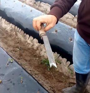 formação Gestão Agrícola