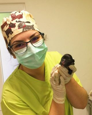 auxiliar-veterinaria-master-d