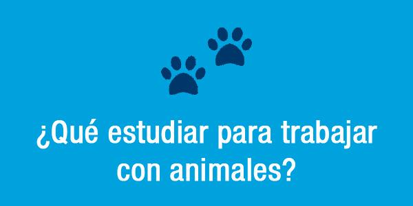 Qué estudiar para trabajar con animales