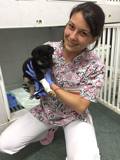 Opiniones veterinaria MasterD