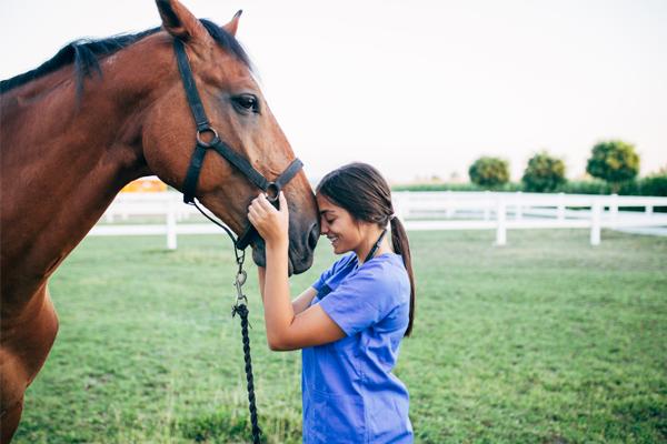 Curso de Auxiliar de Veterinária de Pequenos Animais e Equinos