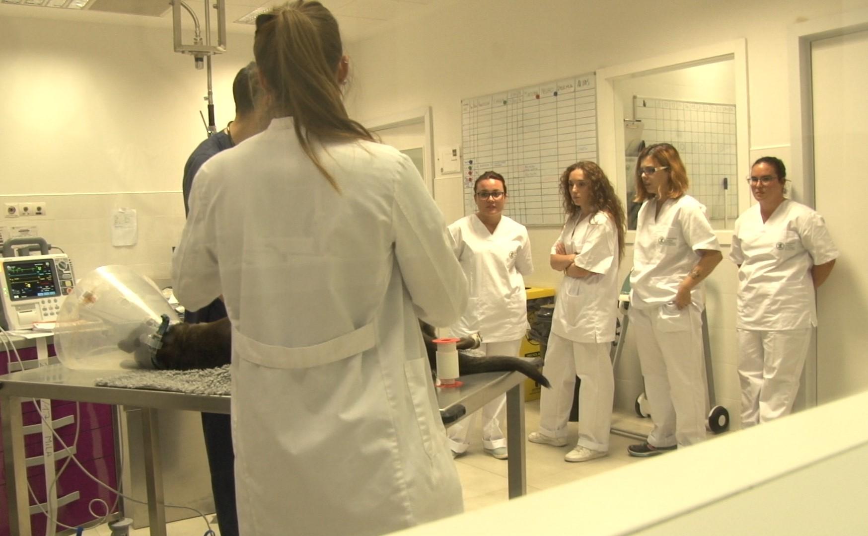 Formación Veterinaria Tarragona