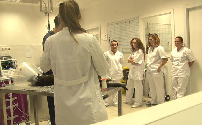 Cursos Auxiliar Veterinaria San Sebastián